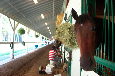 Fortify, trained by Kiaran McLaughlin set to run in the Hopeful Stakes on Monday at the Saratoga Race Course. Photo Erica Miller 8/30/12 Fortify