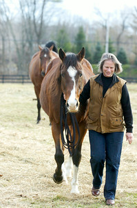 Marilyn Lane walks over one of the retired horses at the Walpole Farm on Ruggles Road where a new program will introduce veterans to work through their emotional problems by working with horses. Photo Erica Miller 11/29/11 news_WalpoleVet2_Sun