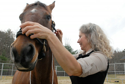 Program lead instructor Melody Squier places a harness on Whiskey before demonstrating at the Walpole Farm on Ruggles Road the a new program to introduce veterans to work through their emotional problems by working with horses. Photo Erica Miller 11/29/11 news_WalpoleVet4_Sun