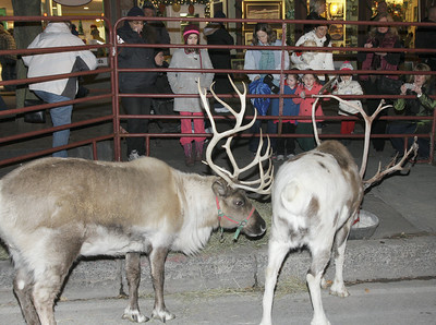Reindeer on Broadway. Ed Burke 11/29/12