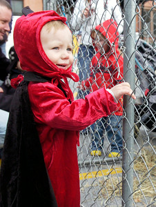 Brayten Stickney, 18 month old of Stillwater, holds on to the fencing to pet a sheep in the Lillians Parking Lot  for the annual Fall Festival Saturday morning. Photo Erica Miller 10/30/10 fea_FallFest3_Sun