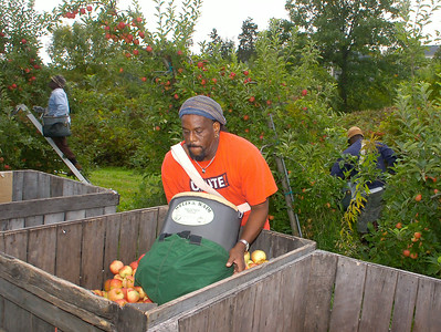 Trinidad native Stan Willianson empties his load of apples into a crate Tuesday at Saratoga Apple in Schuylerville. Williamson, who used to travel seasonally to pick, now lives in the area year-round. Ed Burke 9/22/09
