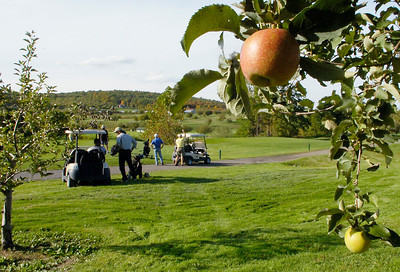 Hungry golfers are free to pick apples from the trees at Orchard Creek Golfer Course. Ed Burke 9/29/10