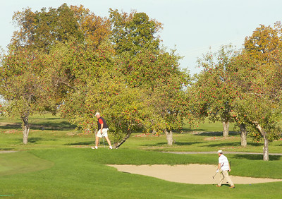 Golfers walk by apple trees on the course at Orchard Creek Golf Club in Altamont. Ed Burke 9/29/10