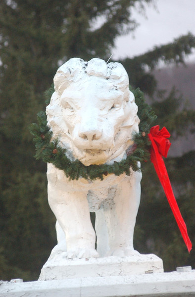 Lion at The Spruces