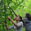 Ryan Hutton/North Adams Transcript<br /> Naiara Palma, 15, of the Bronx and Audrey Cw, 14, of Queens work to clear low hanging branches on the Mahican-Mohawk Trail in North Adams.