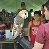 Gillian Jones/North Adams Transcript<br /> Americorp Volunteer Jessamy Schwartz, of the Vermont Institute of National Science holds a barn owl at Riverfest at Cole Field in Williamstown on Saturday.