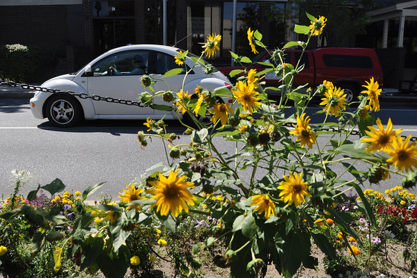 Yellow flowers in the median