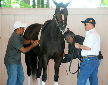 Trainer Steve Asmussen and Assistant Trainer Scott Blasi school Rachel Alexandra between the fourth and fifth race in preparation for the Woodward Stake Race on Saturday afternoon. Photo Erica Miller 9/3/09 spt_RachPaddock3_Fri
