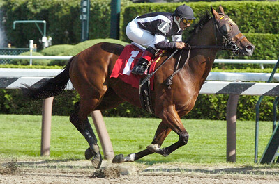 Jorge Chavez, atop Great Attack, finished first for the 7th race at the Saratoga Race Course Monday afternoon. Photo Erica Miller 8/31/09 spt_7thRace_Tue