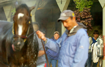 Assistant Trainer Scott Blasi glances at Rachel Alexandra while she takes her morning bath Thursday morning outside their barn on the Oklahoma Track. Photo Erica Miller spt_RachThur1_Fri