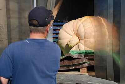 Ukiah Pumpkin Weigh Off