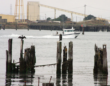 Shaun Walker/The Times-Standard  A sport fisherman's boat passes by decaying pilings and a cormorant near the Wharfinger Building on the Eureka waterfront on Thursday. Sport salmon season is still hot offshore of Humboldt and fish from local freezers may be enriching more dinners than usual this winter.