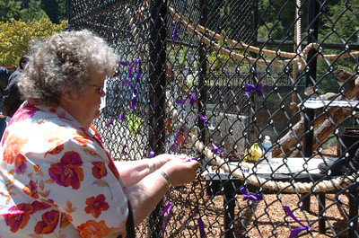Mark McKenna/The Times-Standard Arlene Hartin of Eureka tied a bow for her and one for her husband on the enclosure for Bill the Chimp.