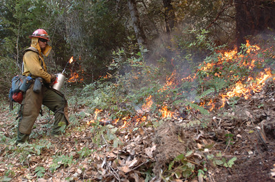 Mark McKenna/The Times-Standard Fire fighter Brandon Osanna lights a hillside on fire to help make a fire break near the Northern California town of Happy Camp. Several fires in the area have burned roughly 5,000 acres and the entire incident is being called the Elk Complex Fire.