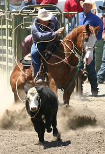 Josh Jackson/The Times-Standard  Chuck Boling competes in tie-down roping in the CCPRA Rodeo at the Redwood Acres Fair and Rodeo on Saturday.