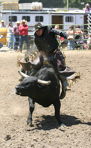 Josh Jackson/The Times-Standard  Aaron Bashum rides in the bullriding event in the CCPRA Rodeo at the Redwood Acres Fair and Rodeo on Saturday.