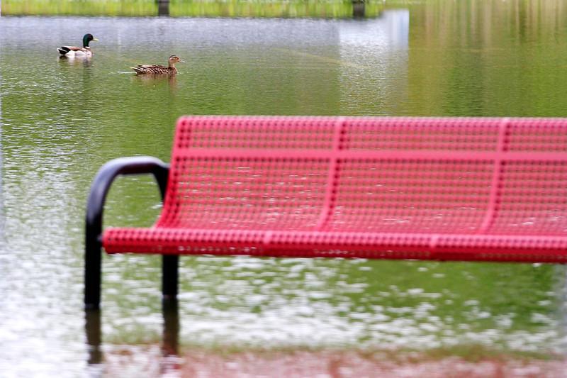 Wahc Park Flooded