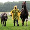 Walking Horses Rain