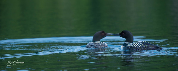 loons-0780