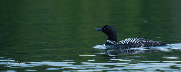 loons-0776