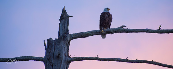 eagle-1054