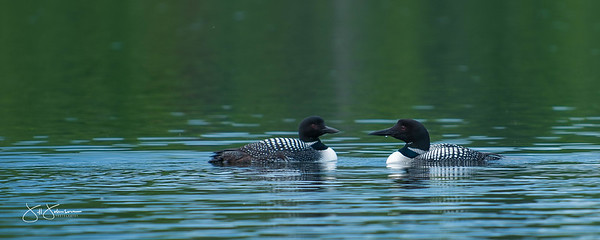 loons-0831