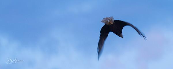 eagle-1108