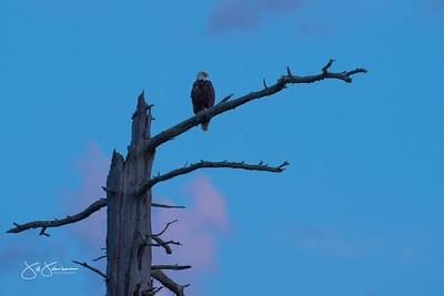 eagle-1086