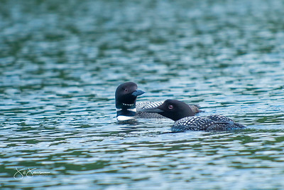 loons-0735