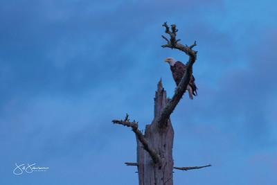 eagle-1099