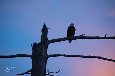 eagle-1060