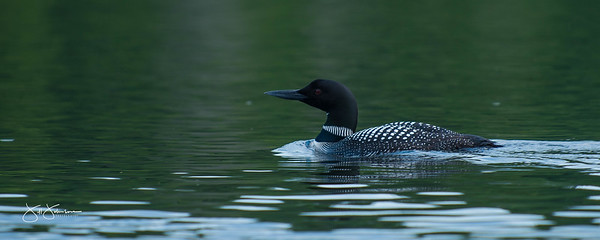 loons-0775