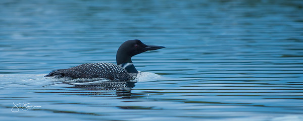 loons-0806