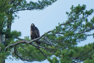 eagle2-0663