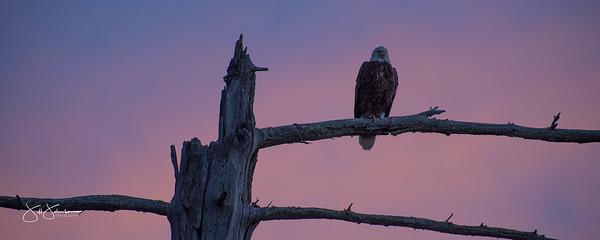 eagle-1052