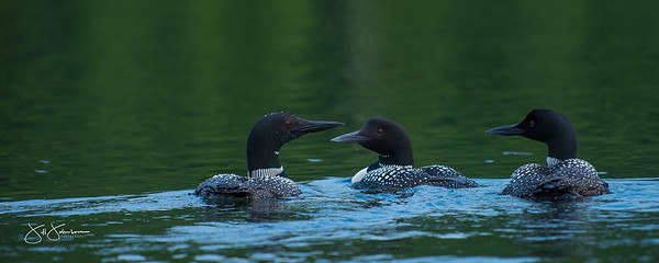 loons-0785