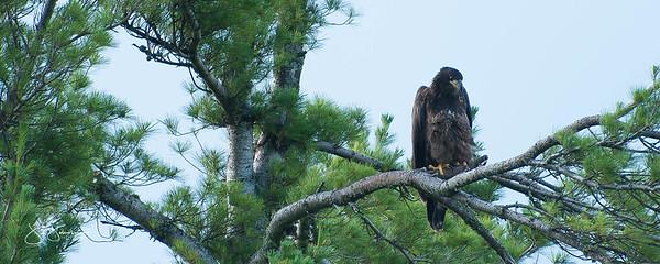 eagle2-0659