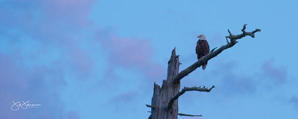 eagle-1093