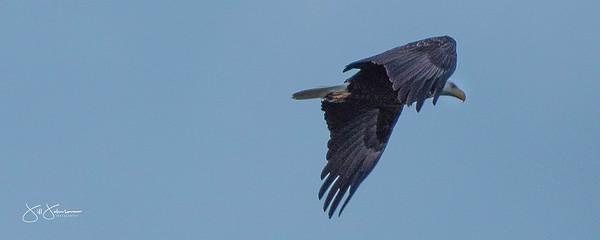 eagle2-0976