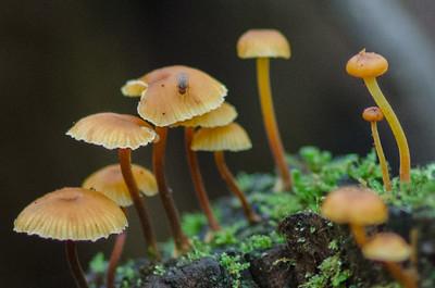 mushroom-8070