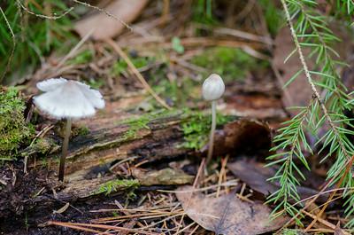 mushroom-8252