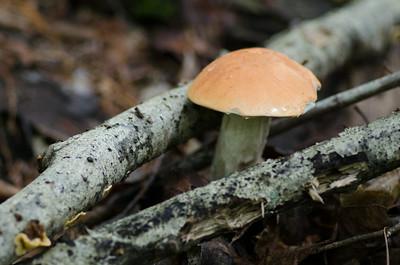 mushroom-8120