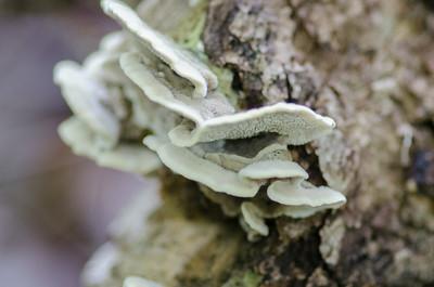 mushroom-8223