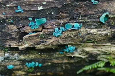 mushroom-8196