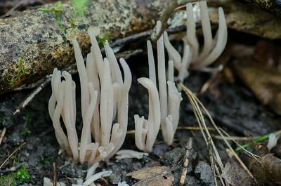 mushroom-8155