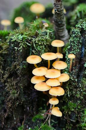 mushroom-7990
