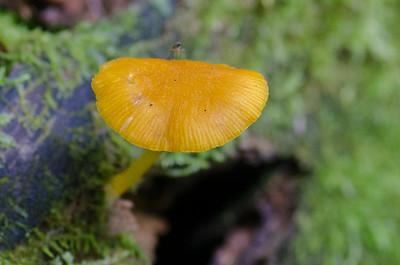 mushroom-8258