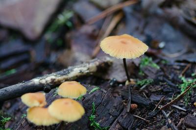 mushroom-7984