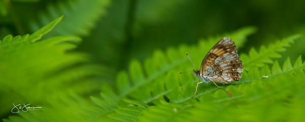 bugs-0344